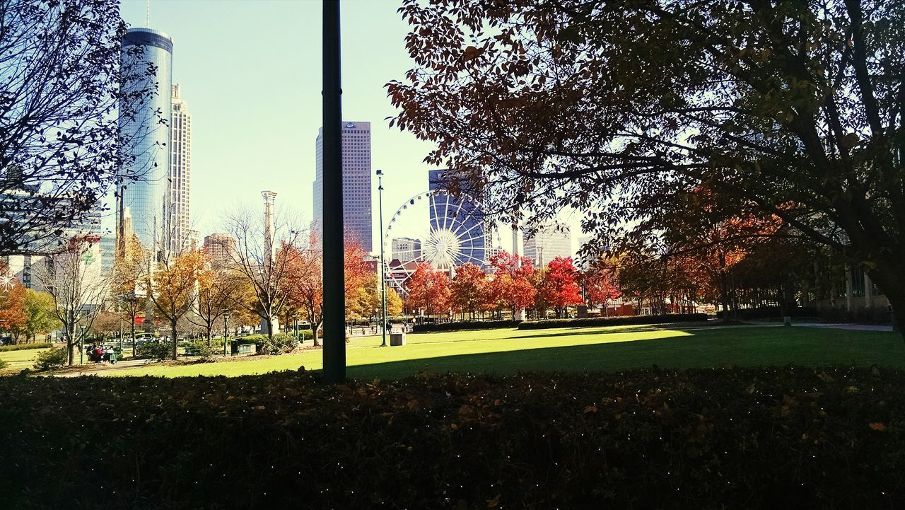 Trees In Park At City Against Sky