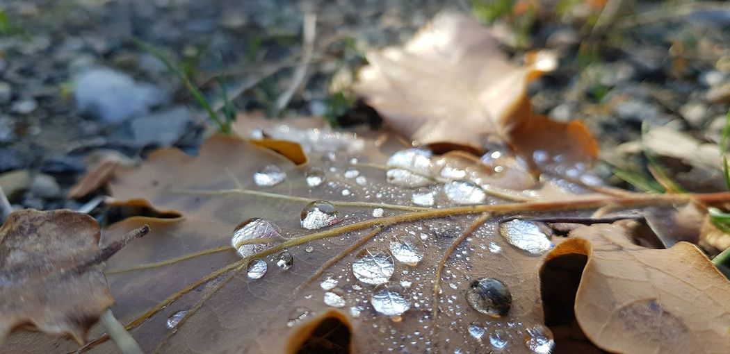 Close-up of wet dry leaves on field during winter