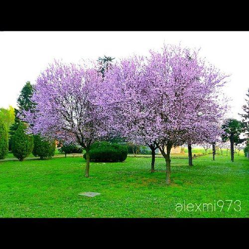 Bubano Bologna Italy Italianlandscape scatti_italiani ita alexmi973