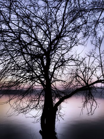 Tree. Nature Outdoors Tranquil Scene No People Lone Tree Branch Beauty In Nature Sky Silhouette Scenics Landscape Cold Temperature Week On Eyeem EyeEm Nature Lover From My Point Of View in Brianza