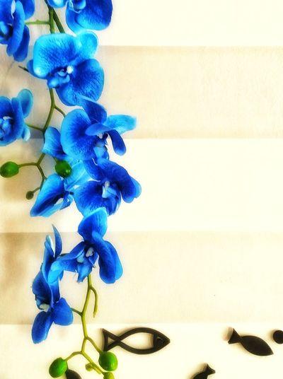 The Still Life Photographer - 2018 EyeEm Awards EyeEmNewHere Blue No People Close-up Indoors  Decoration Still Life Hanging Flower Ornate Orchid Fish Decoration Samsungj5photography📱 3XSPUnity