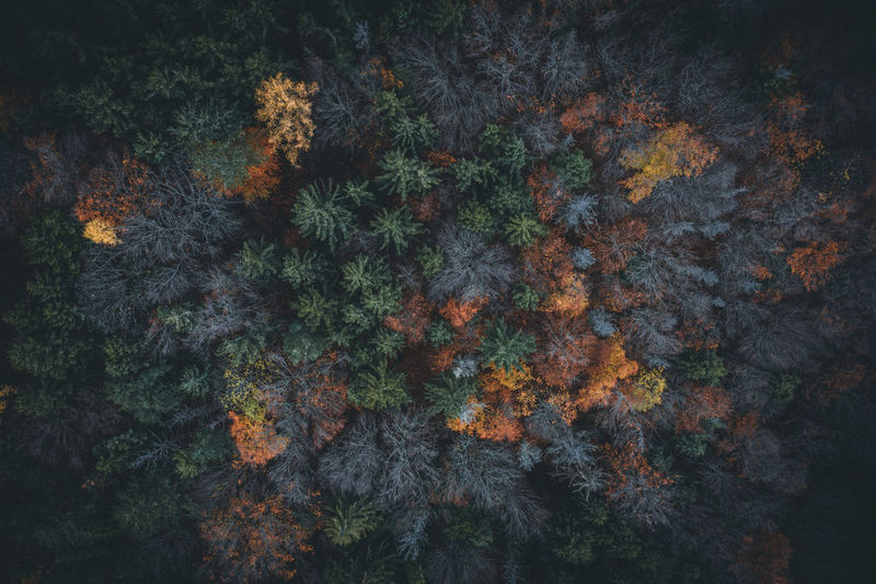 Full frame shot of trees growing in forest during autumn