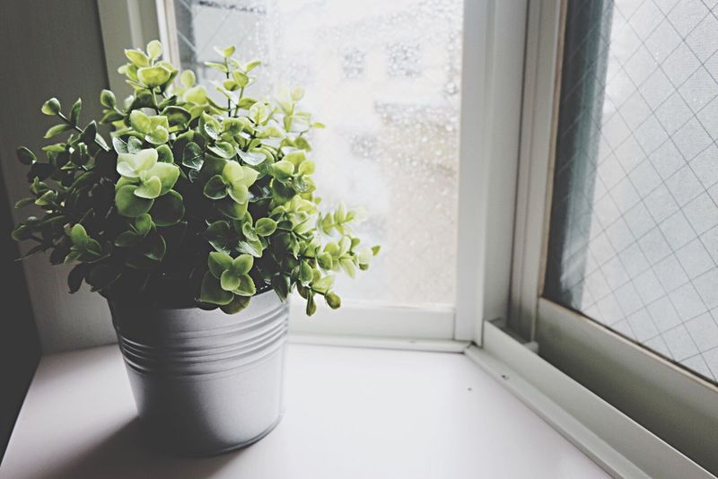 Rainy afternoon 🌧 Potted Plant Window Leaf Indoors  Mood Growth Home Interior EyeEmNewHere Break The Mold TCPM