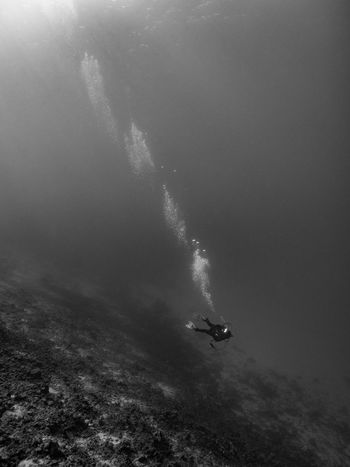 The lonely diver Diving Scuba Diving Blackandwhite Unrecognizable Person Underwater Vertical Adventure Outdoors Hawaii Pacific Big Island Lonely Alone Copy Space Wide Angle A Bird's Eye View Monochrome Photography Finding New Frontiers Welcome To Black Long Goodbye The Great Outdoors - 2017 EyeEm Awards Live For The Story Lost In The Landscape