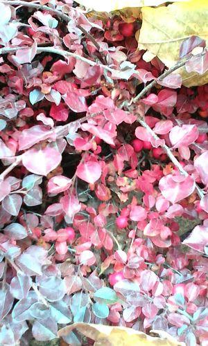 It's so beautifull autumn) Rostov-na-Donu осень прекрасна 🌾🍂🍃 Autumn🍁🍁🍁 Ростов-на-Дону осенние листья Россия Russia