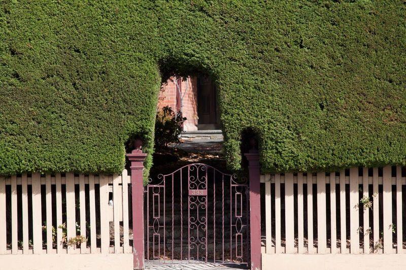 Hedge cutout Hedge Garden Green Gate Landscape Fence Arches Edwardian Suburban Landscape