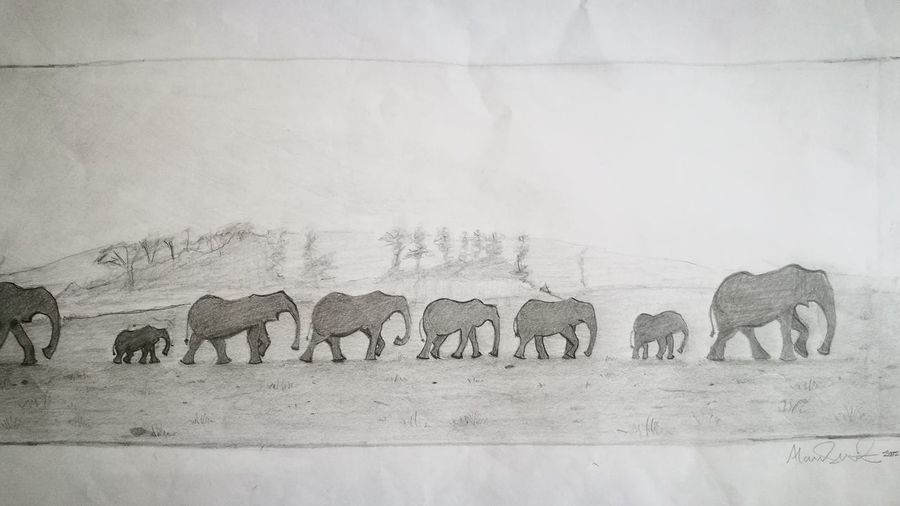 Taken From Art On My Wall Fun Drawing Sketch Elephants In Trail Pursuit Of Water & Food Survival Life Of Animals Drawn