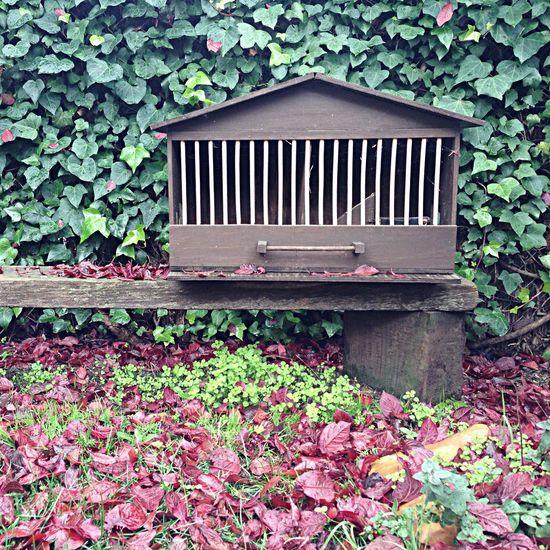 birdhouse fall