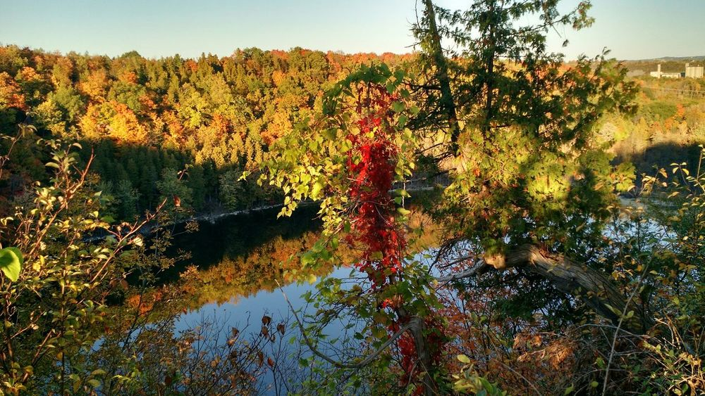 Clarks Reservation New York Upstate Syracuse  Fall Leaves Trees Hiking Day Off