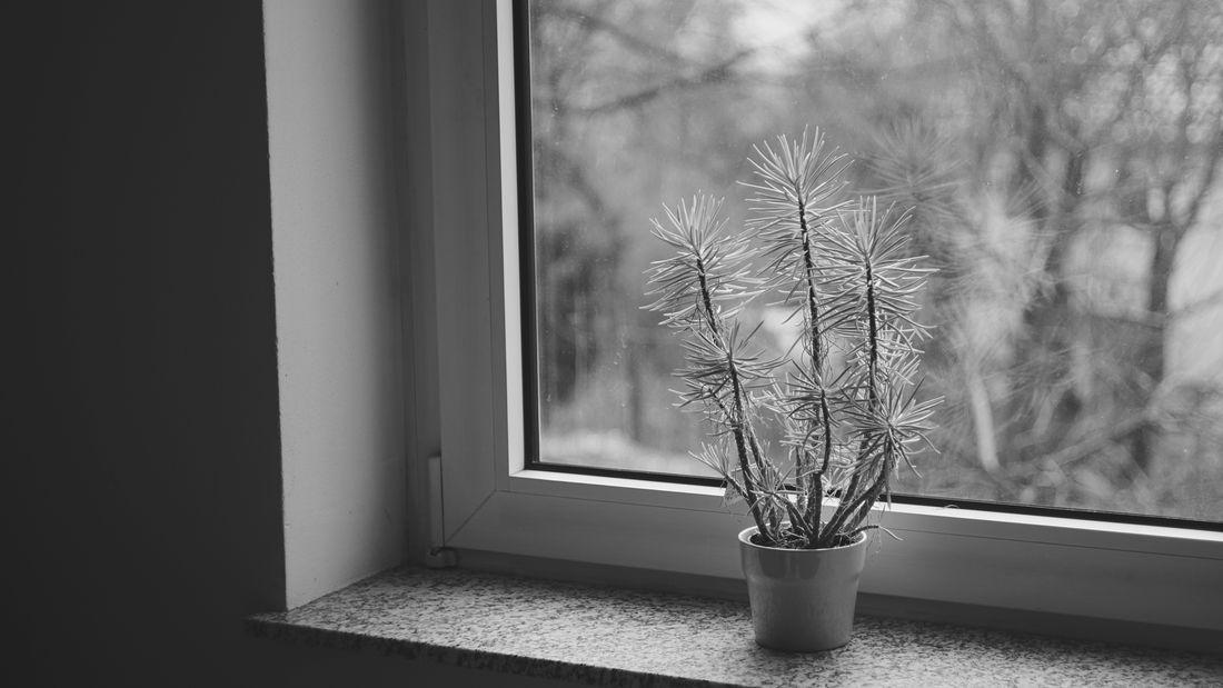 Window Indoors  Shadow Tree No People Day Light Sony Sony A6000 Sonyalpha Plant Himalayan Trees