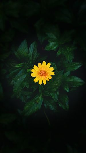 Flower Freshness Flower Head Yellow Growth Blossom In Bloom Beauty In Nature Close-up Flower Freshness Fragility Flower Head Petal Yellow Growth Blossom In Bloom Beauty In Nature Springtime Close-up Nature Botany Single Flower