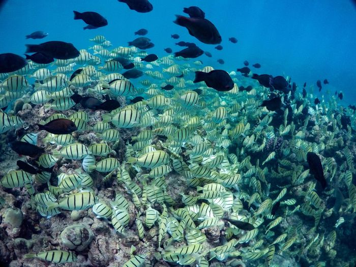 Fish in sea