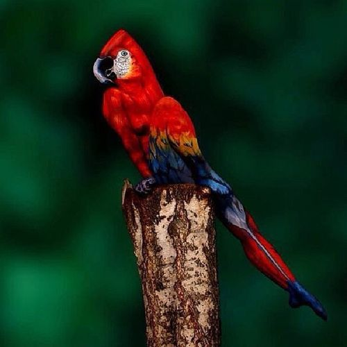 Woman painted to look like a parrot. Art Bodypaint