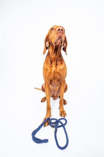 One Animal Dog