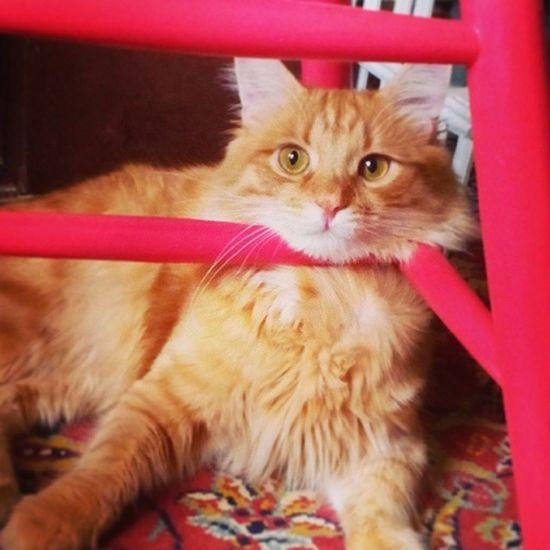 А че, удобно) cat Catpic Instacat