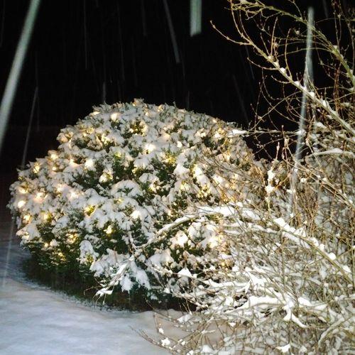 Winterzauber Erster Schnee Verzaubertewelt Schnee Winter No People Close-up Day Nature Indoors