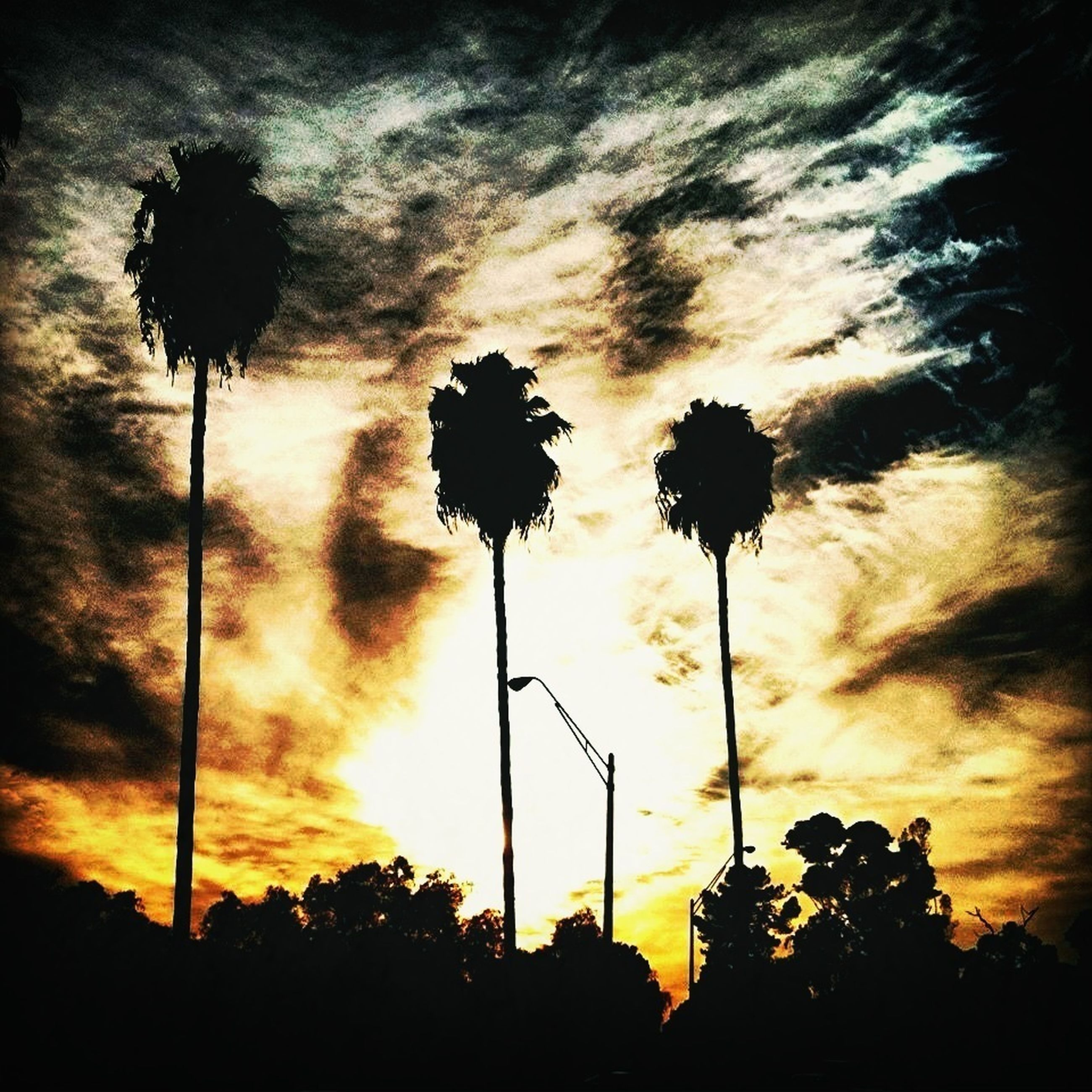 silhouette, sunset, sky, low angle view, cloud - sky, tree, beauty in nature, nature, growth, street light, tranquility, flower, cloudy, dusk, cloud, palm tree, orange color, scenics, outdoors, outline