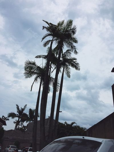 Sky Day Dia Coqueiros Céu Blue Azul Coconut