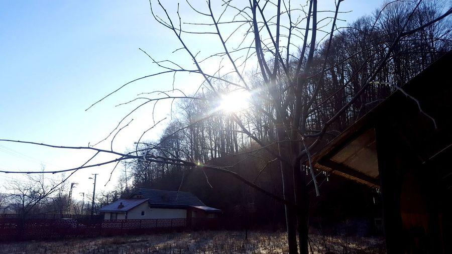 Woods Sun Sky