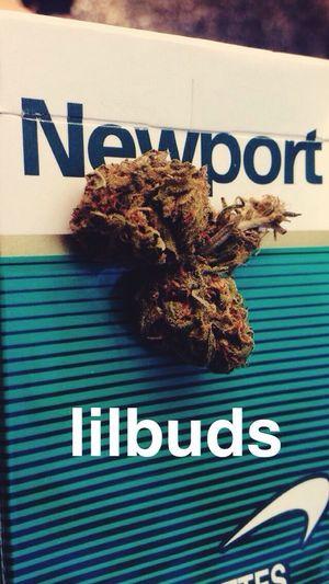 Lilbuds Bud Weeed