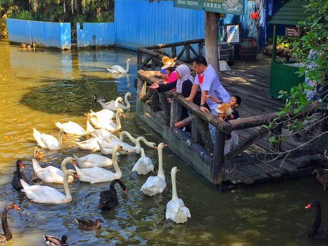 Finding New Frontiers Water Real People Lifestyles Outdoors Lake Nature Men Day Bird One Person Family Trip Thailand Travel Destinations Safari World Sawn