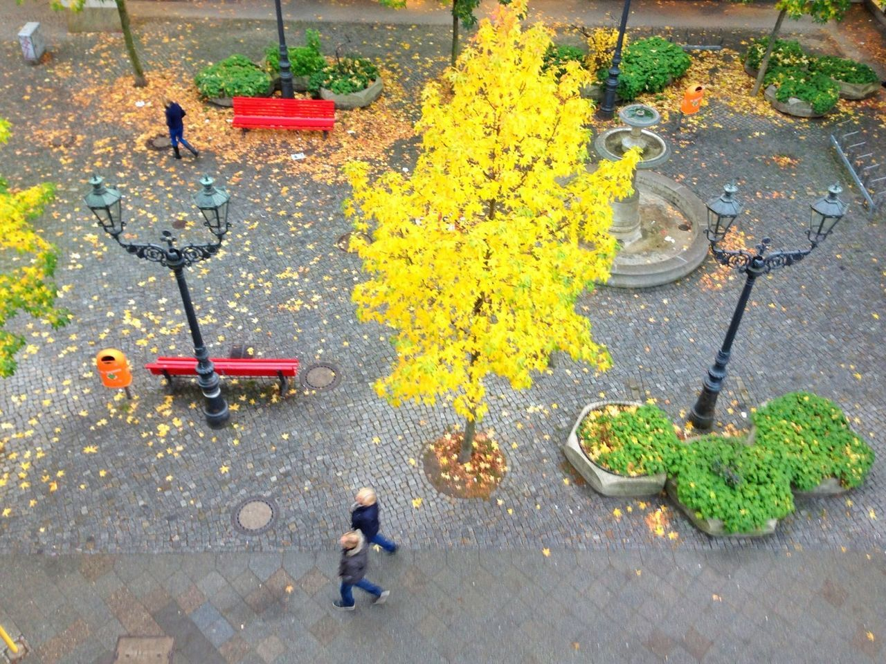 autumn, leaf, high angle view, street, outdoors, change, day, flower, sidewalk, plant, no people, nature, maple leaf, childhood, beauty in nature