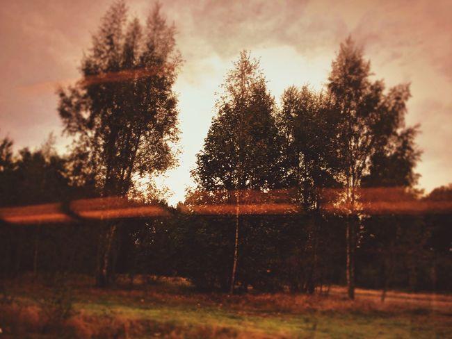 Melancholic Landscapes op mijn weg naar huis zo cute! ❤️