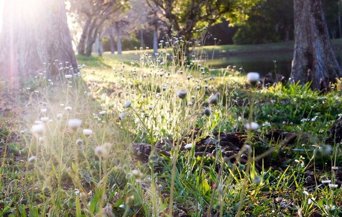morning' Grass Nature Growth Beauty In Nature Sunlight Landscapes Bright No People Scenics Freshness Local