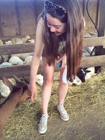happiness is a farm full of sheep and goats
