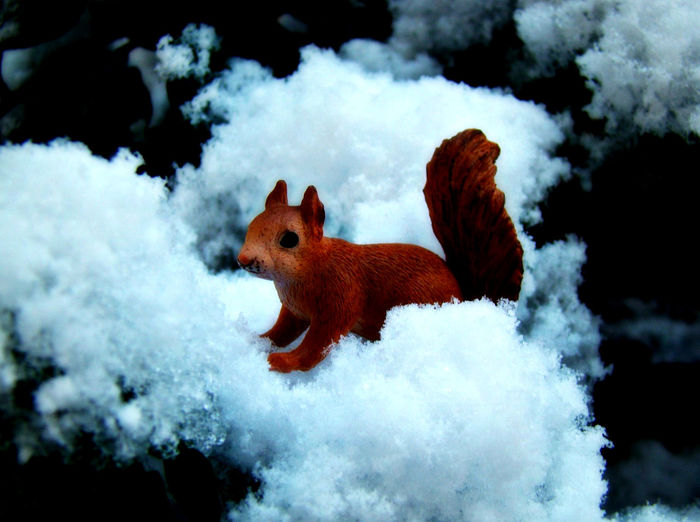 Squirrel Schleich Animal Day Figurine  Mammal Nature Outdoors Snow Toy Toyphotographer Toyphotography