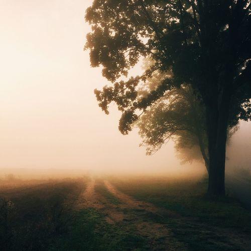 Morning Poland IPSScenery Trees Foggy Fog Daybreak Dawn Tree Misty IPS2015Fall IPS2016Landscape
