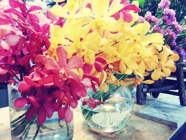 秋色 Flowers#nature#hangingout#takingphotos#colors#hello Worldflorafauna F