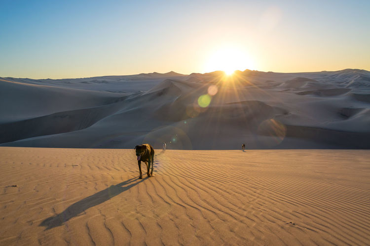 Low angle view of dog on sand dune