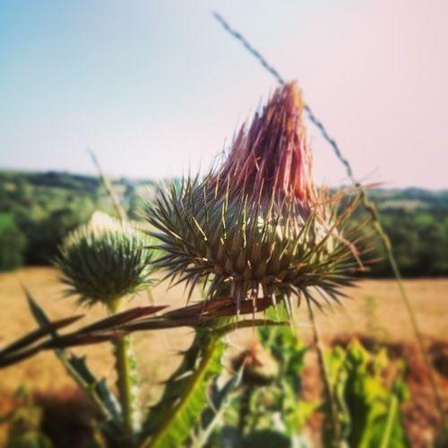 Leto na selu, Summertime , Love Nature , LgL7II