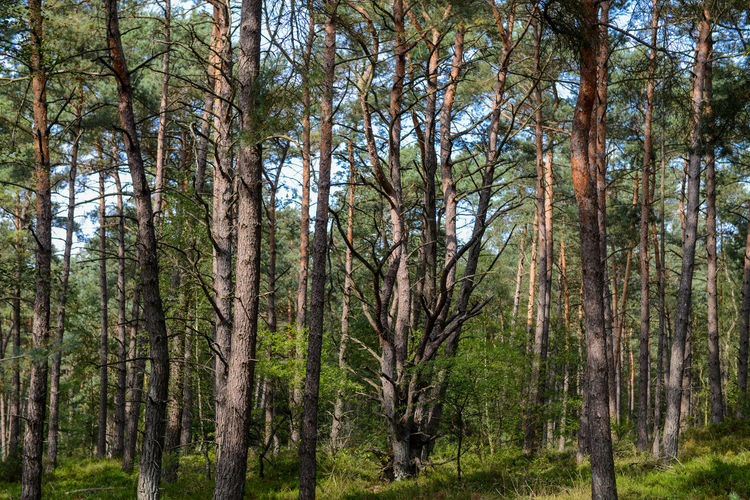 Nieuw Soerel walk in Nunspeet, The Netherlands Nature Netherlands Nunspeet The Netherlands Tree Tree Trunk Trees Veluwe Vierhouten Forest Holland Nieuw Soerel Scenics Soerel Vierhouter Heide