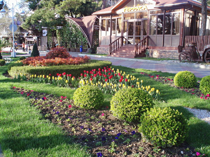Decorative Bushes Decorative Lawns Flowers Gelendzhik Green Plants Quay Russia Spring Street Town Tulips Vegetation Verdure Urban Spring Fever
