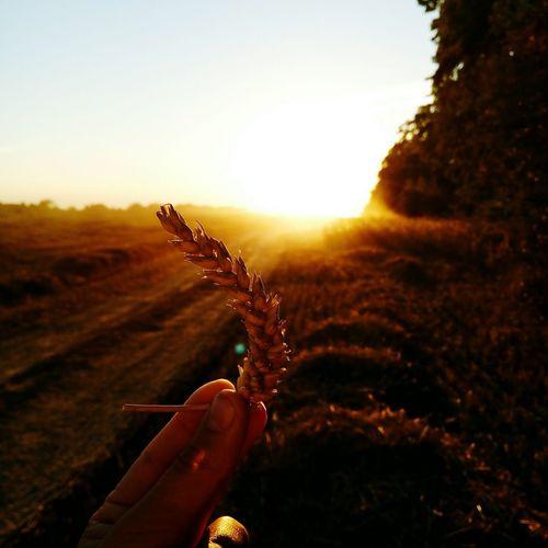 Pastel Power sunset