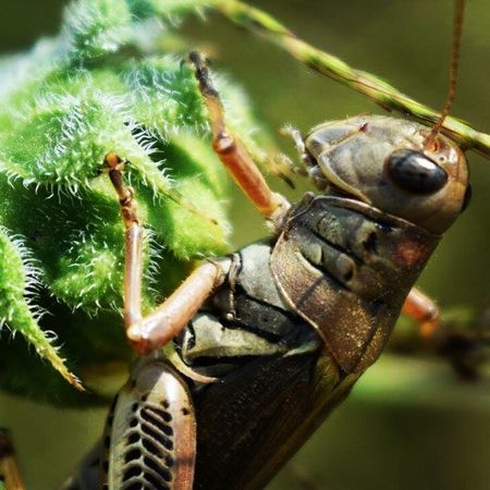 Up close Animal Themes One Animal Animals In The Wild Insect Close-up No People Animal Wildlife Focus On Foreground Day Nature Outdoors Grasshopper