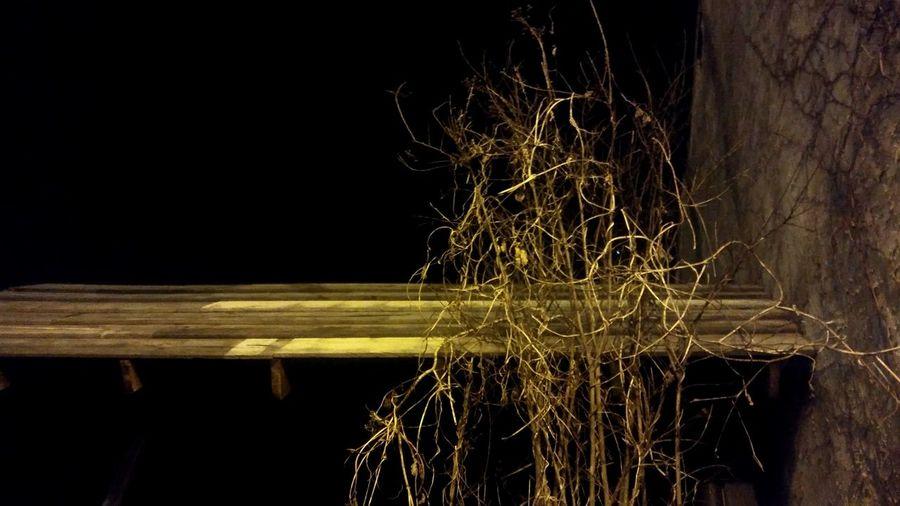 Illuminated plants at night