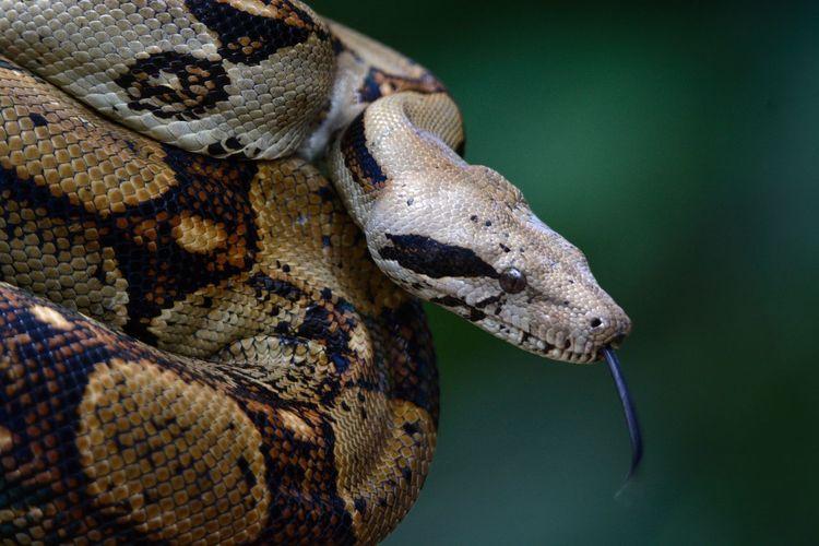 Snake Serpiente Costa Rica Discovery Animals In The Wild Wildlife Adrianureña Fotografia Fotography Photography Photooftheday Animal Animals Iguana Animal Scale Animal Eye Eye