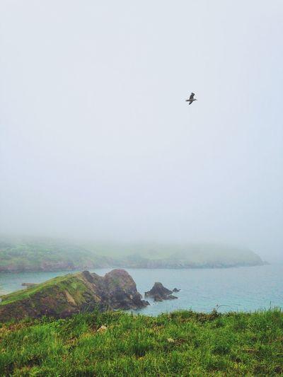 Fog Mysterious Devon United Kingdom Cliffs Seagulls Bird Photography