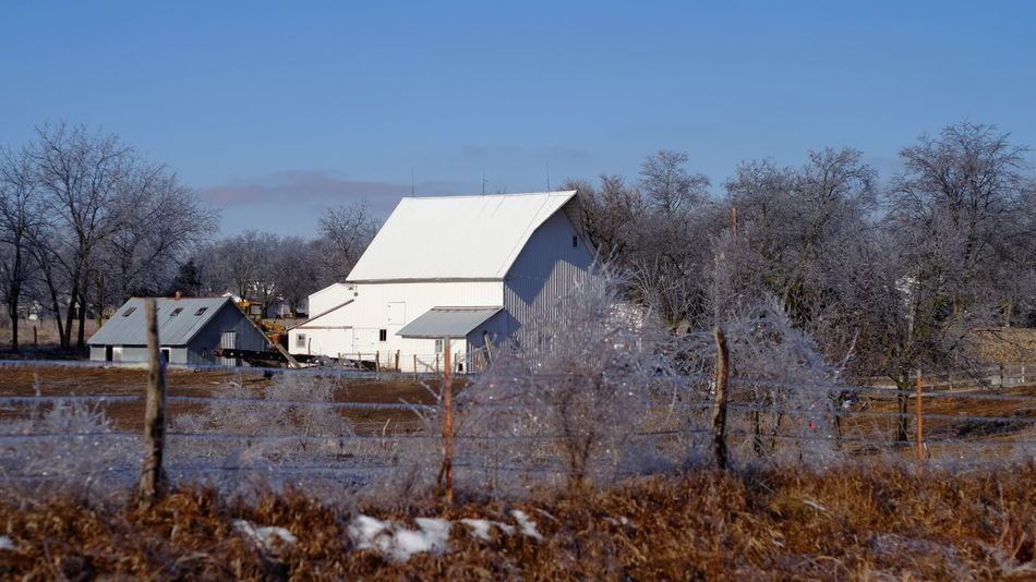 Visual Journal January 17, 2017 Western, Nebraska Agricultural Building Architecture Barn Camera Work Canon FD 50mm F/1.8 Extreme Weather Eye 4 Photography EyeEm Gallery Farm FUJIFILM X-T1 Ice Storm Icy Day Manual Focus My Neighborhood Nebraska Weather Photo Diary Photo Essay Photography Rural America Small Town Stories Storytelling Visual Journal Winter Winter Winter Wonderland