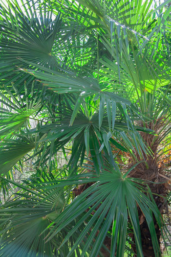 Close-up of palm tree leaves in forest