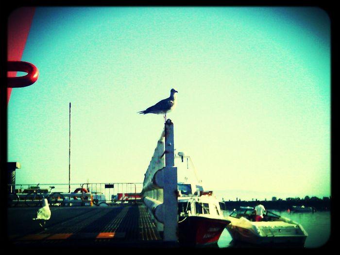 Arrival at São Jacinto's ferry docks...