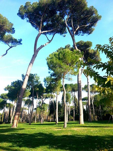 Roma Trees Villa Borghese Park