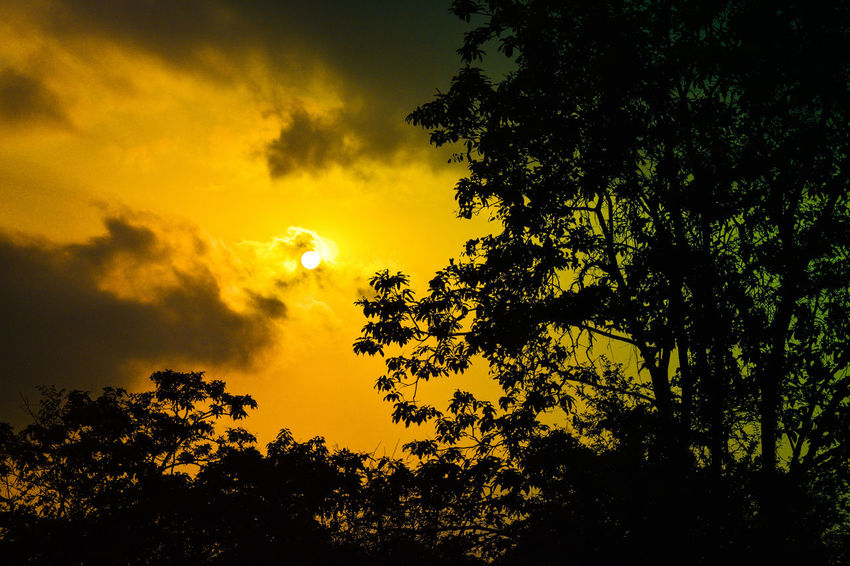 sunset Sunset Nikon D5300 Sun Orange Tree Sunset Silhouette Forest Sky Dramatic Sky Sky Only Heaven Romantic Sky Branch