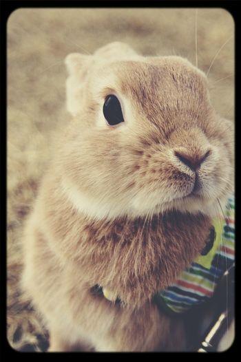 i Love my rabbit :) I Love My Dog