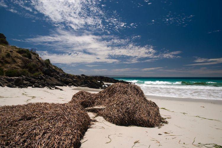 Dry seaweeds at beach against sky