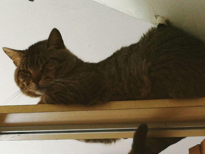 gato, cat, house cat First Eyeem Photo