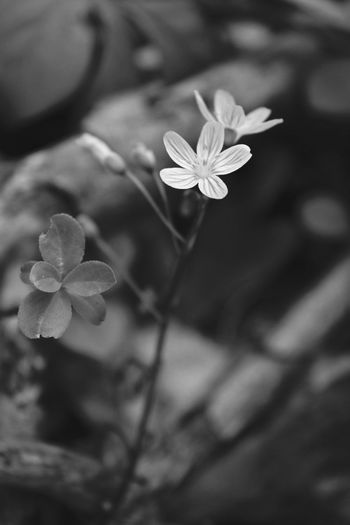 Spring Flowers Woods Nature Beauty Black And White